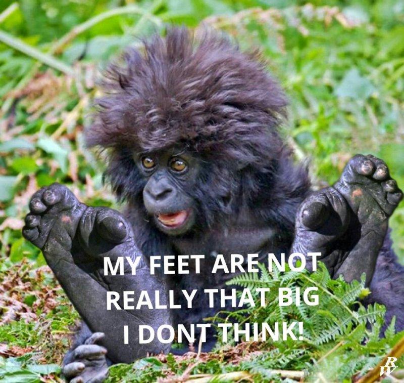 baby_bigfoot_by_dwarf4r-d7ae1cv_kindlephoto-146070847.jpg