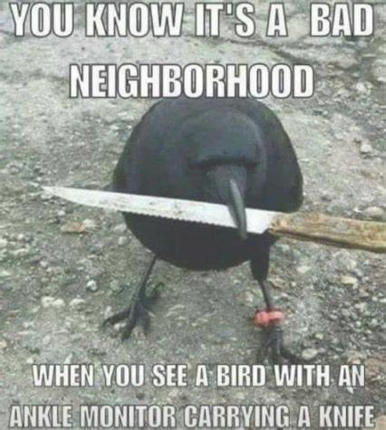 bad-bird.jpg