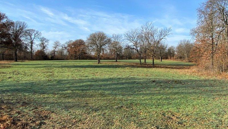 Middle Field (1).jpg