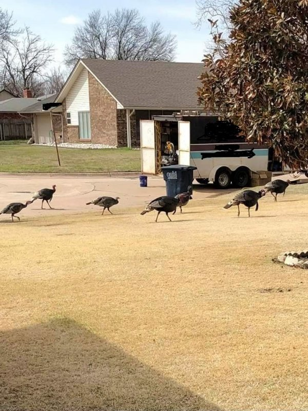 turkeys.jpg