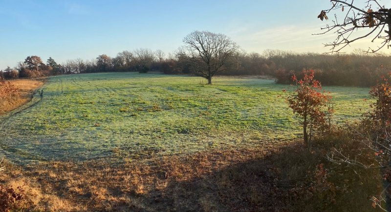 West Field (3).jpg