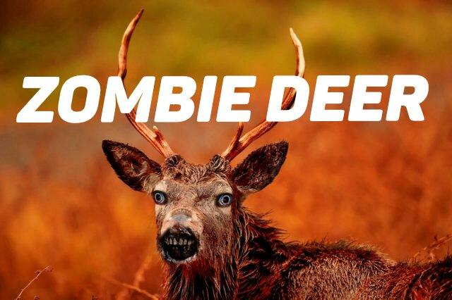 zombie-deer_option-1-640x426_kindlephoto-47652632.jpg